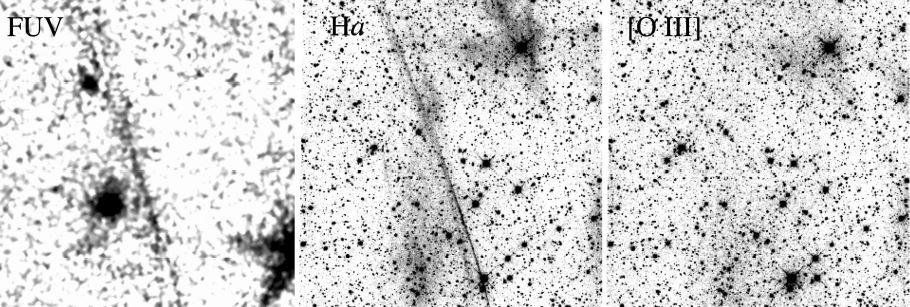 Emissions UV lointaines et optiques de trois très grands restes de supernova situés à des latitudes galactiques inhabituellement élevées